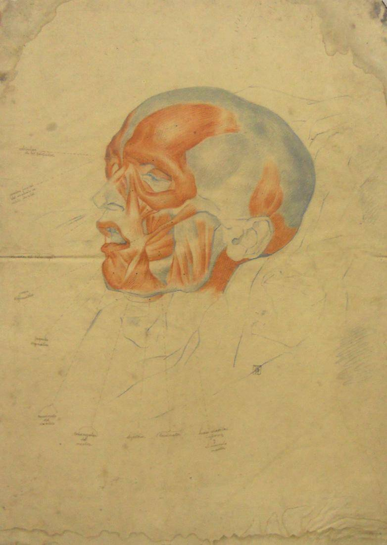 Obra ampliada: Anatomía - estudio en color - Juan Manuel Blanes