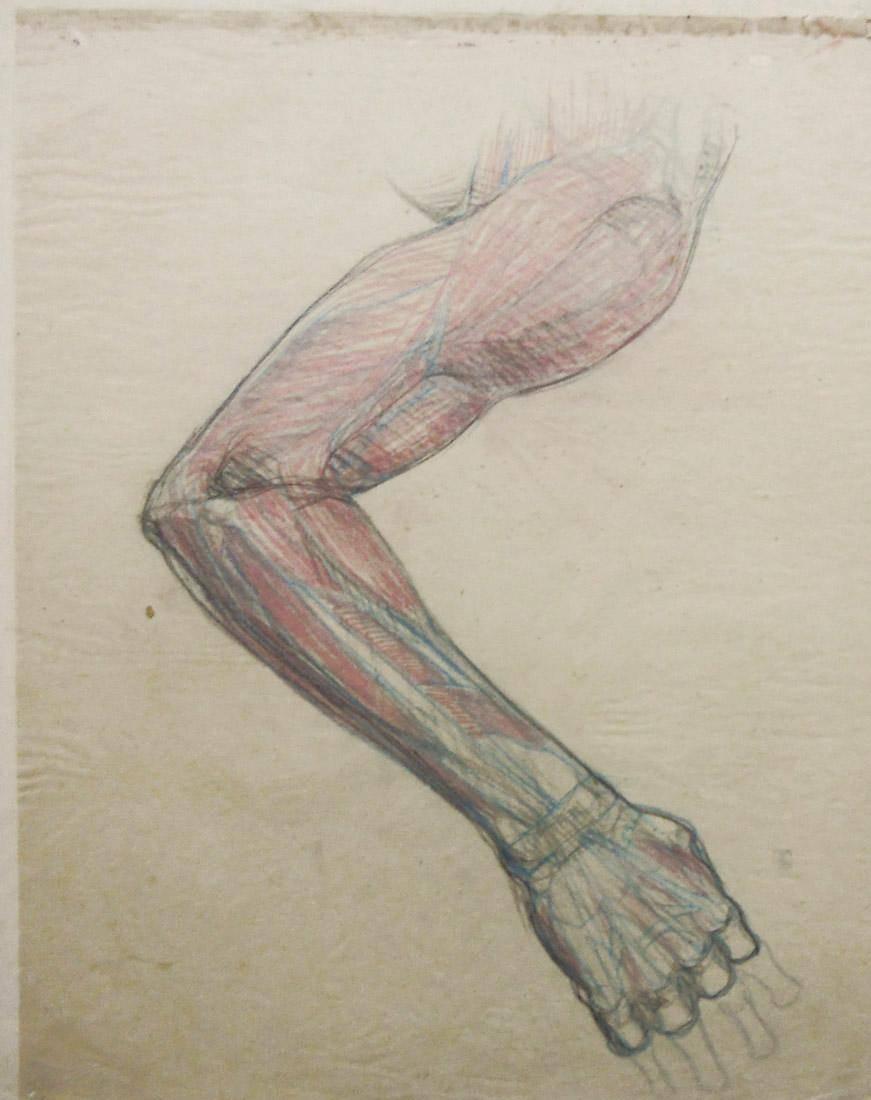 Obra ampliada: Anatomía - estudio de color - Humberto Causa