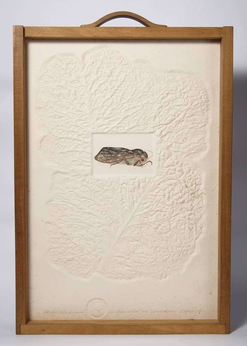 Obra ampliada: Polilla de primavera - Rimer Cardillo